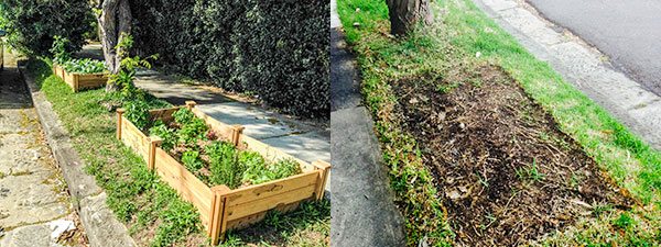 Now you see it now you don't — Randwick Council forced the owners to trash this footpath garden on the basis of one single vexatious complaint.